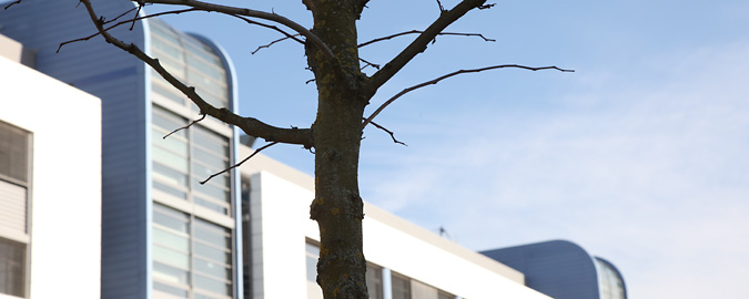 This view of a bare winter tree outside white buildings accompanies all pages related to Landlord or Agency representation on the RealCorp Luxembourg website